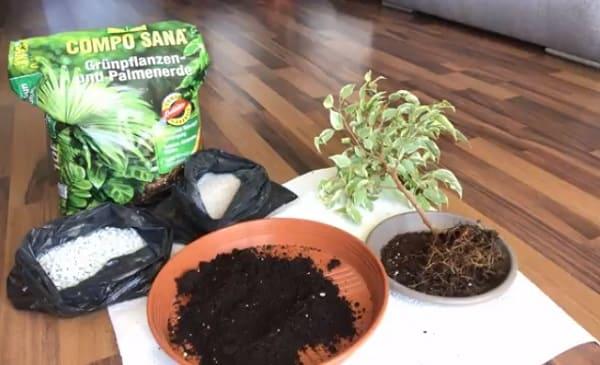 Грунт для растения