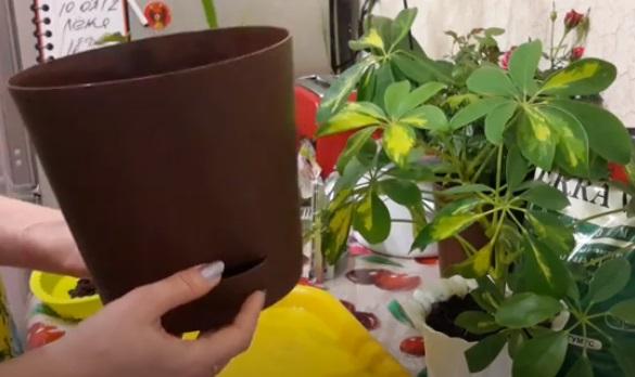 Горшок для пересадки растения