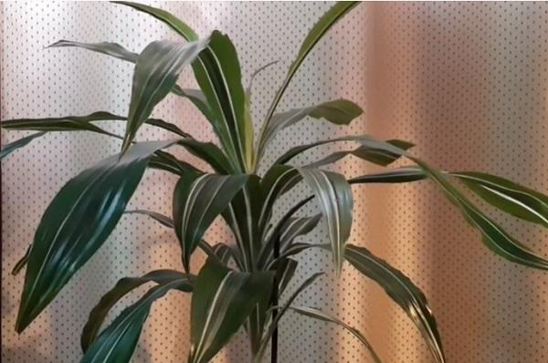 Взрослое растение