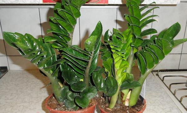 Два растения