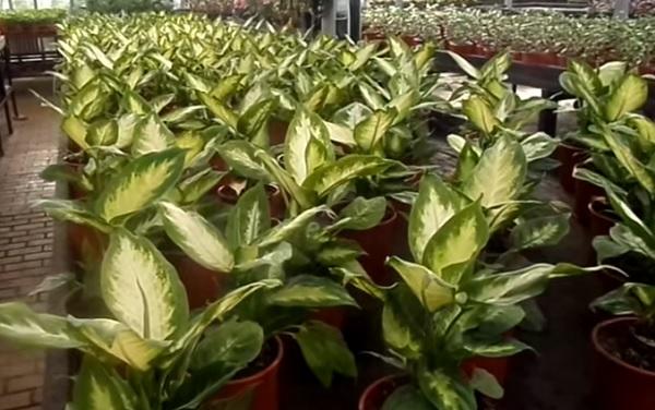Молодые растения