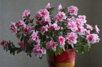 Подходящий горшок для комнатного растения