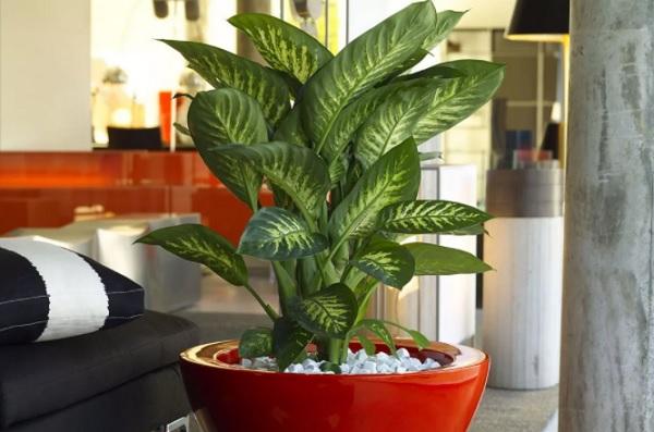 Растение в интерьере комнаты