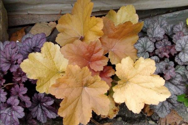 Куст с желтыми листами