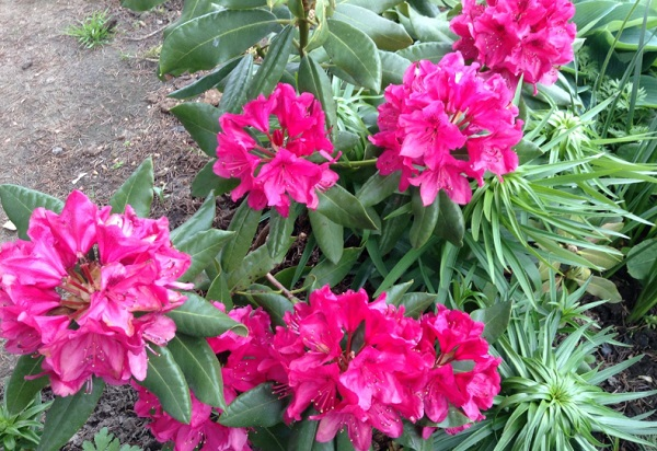 Цветущий кустарник