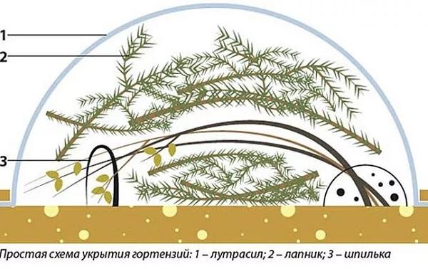 Схема укрытия кустарника на зиму