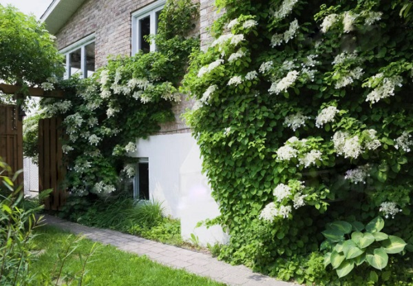 Озеленение стены