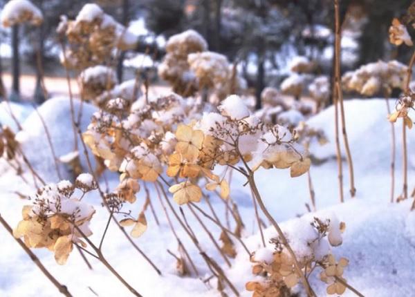 Зимовка кустарника