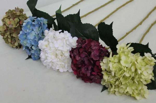 Расцветки древовидной гортензии