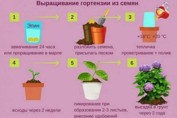 Схема посева семян и выращивание рассады