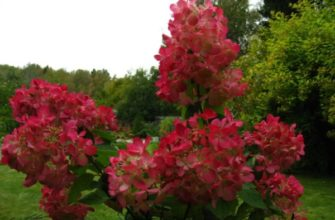 Цветущие метелки куста