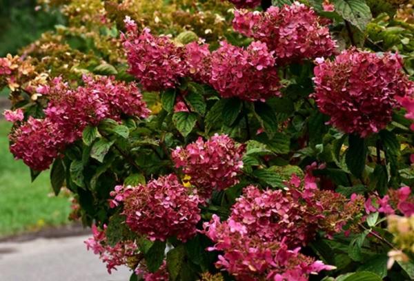 Цветущий кустарник в конце сезона