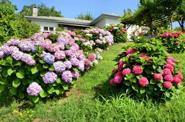 Цветущие кустарники в саду