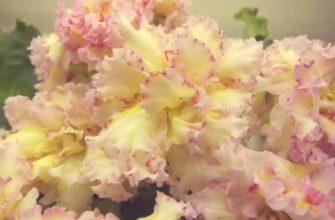 Период цветения