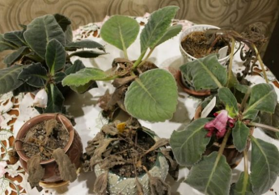 период покоя семян